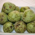 Can guinea pigs eat cherimoya